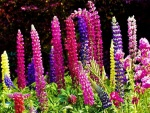 Flores en espiga