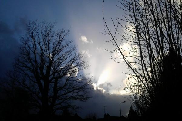 El sol tibio acariciando las ramas de los árboles