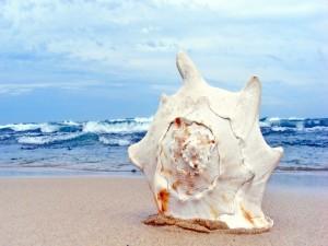 Caracola blanca sobre la arena de la playa
