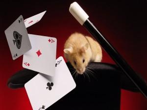 Postal: Ratón saliendo de la chistera