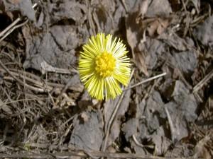 Flor amarilla en la tierra