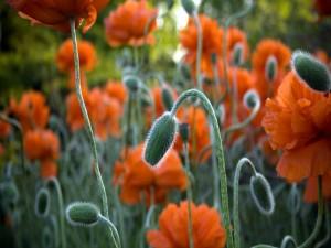 Flores naranjas en el campo