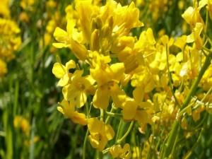 Postal: Flores silvestres de color amarillo