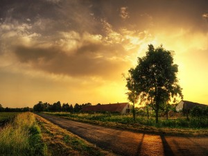 Postal: Árbol tapando al sol