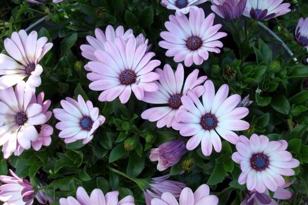 Bonitas flores en la planta