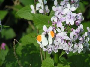 Postal: Bonita mariposa sobre las flores