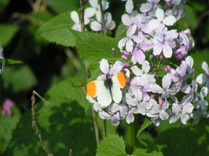 Bonita mariposa sobre las flores