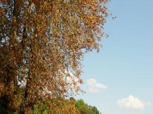 Postal: Hojas secas en el árbol