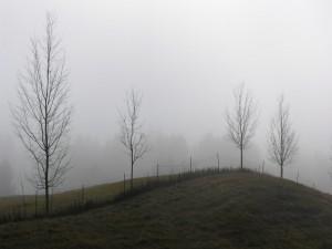 Postal: Niebla en invierno