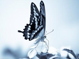 Las largas patas de la mariposa