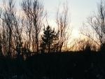 El sol tras los arbustos