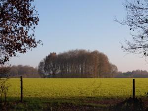 Postal: Grupo de árboles sobre la hierba
