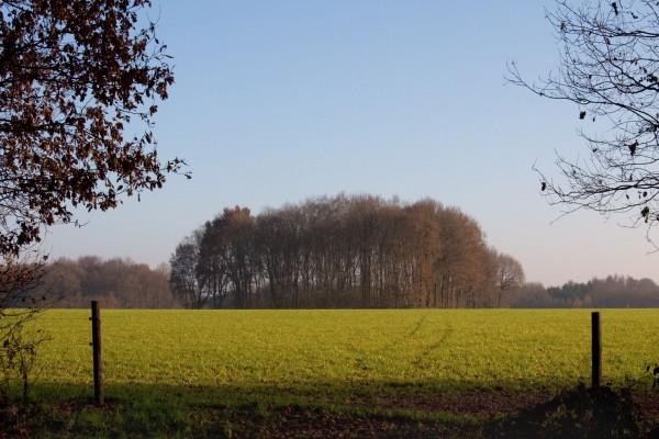 Grupo de árboles sobre la hierba