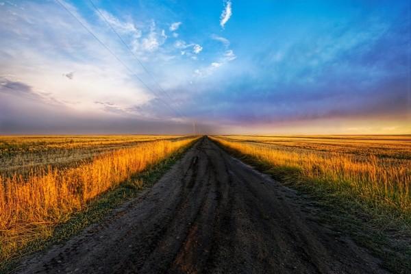 Camino de tierra entre campos