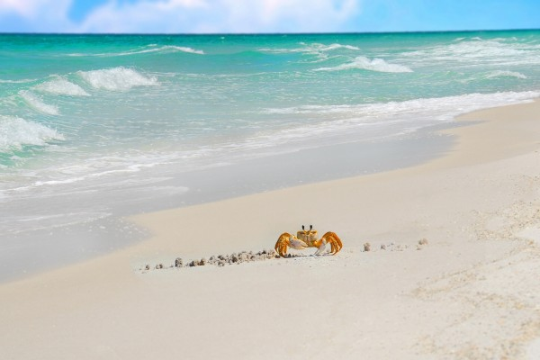 Cangrejo en la arena de la playa
