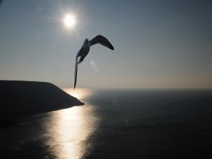 Postal: Gaviota volando alto