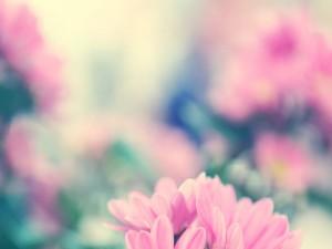 Enfocando las flores rosas