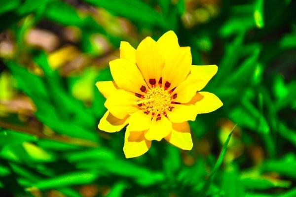 Resplandeciente flor amarilla