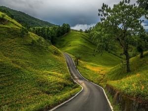 Carretera en la naturaleza
