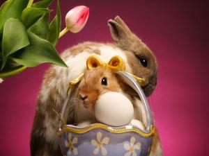 Postal: Conejos y huevos de pascua