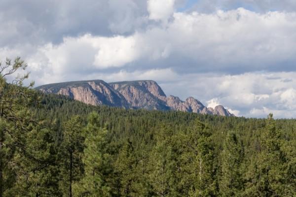 Pinos y montañas