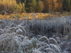 Postal: Plantas heladas al amanecer
