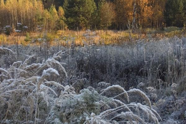 Plantas heladas al amanecer