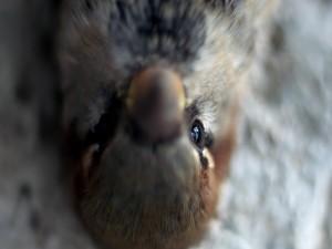 Postal: El ojo del pájaro