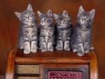 Cuatro gatitos de color gris