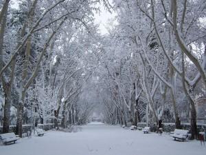 Postal: Nieve en el parque de Abelardo Sánchez (Albacete)