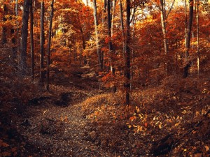 Postal: Otoño en el bosque