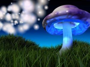 Seta multicolor sobre la hierba