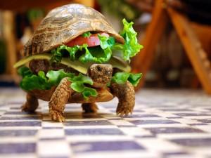 Postal: Hamburguesa dentro de la tortuga