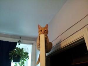 Postal: Gato en las alturas
