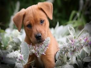 Postal: Cachorro marrón