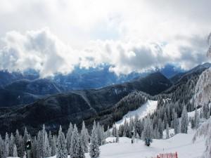 Postal: Pinos con nieve en la montaña