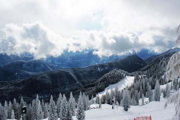 Pinos con nieve en la montaña