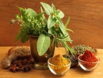 Especias y hierbas aromáticas