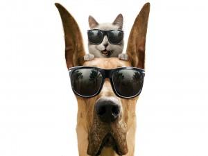 Postal: Gato y perro con gafas de sol