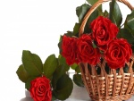 Rosas rojas en una cesta