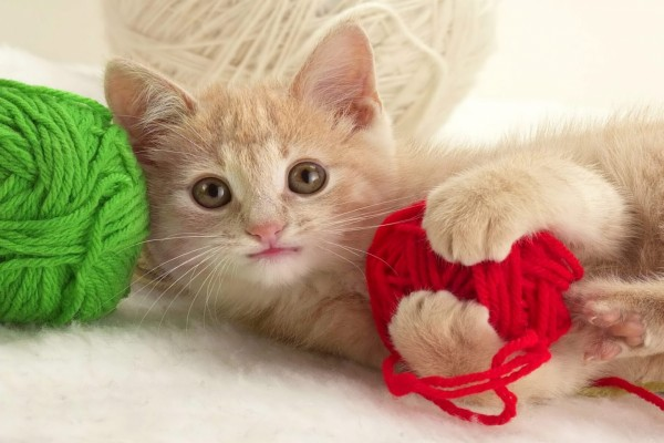 Gatito con un ovillo de lana roja