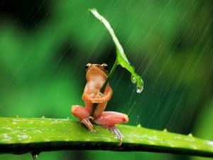 Postal: Una rana usando una hoja de paraguas