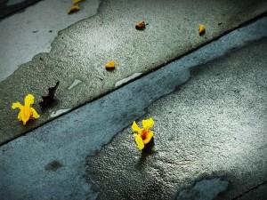 Postal: Flores caídas en el suelo