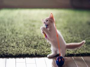 Postal: Gatito mordisqueando su juguete