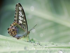 Postal: Mariposa sobre una planta