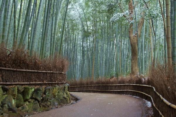 Cañas de bambú a lo largo del camino