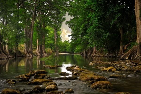Grandes árboles en el río