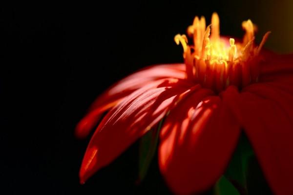 Preciosa flor roja