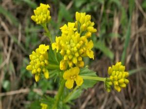 Postal: Pequeñas flores amarillas