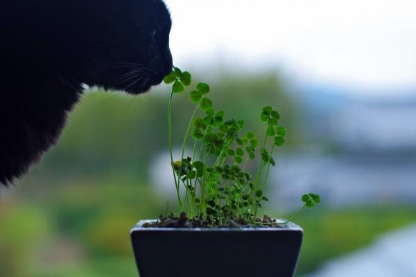 Gato oliendo la planta